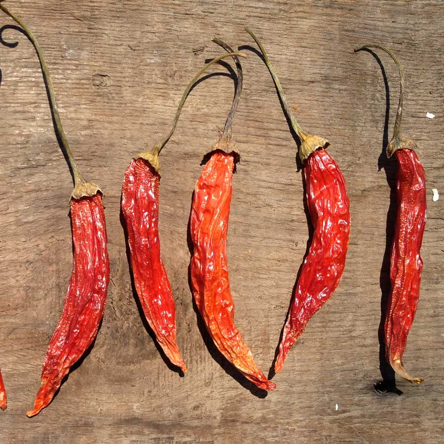 dried chilis