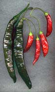 Chilaca Red Aji