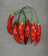 Red Aji Chile