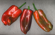 Red Poblano Chile